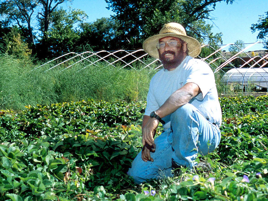 Man kneeling in vegetable beds.