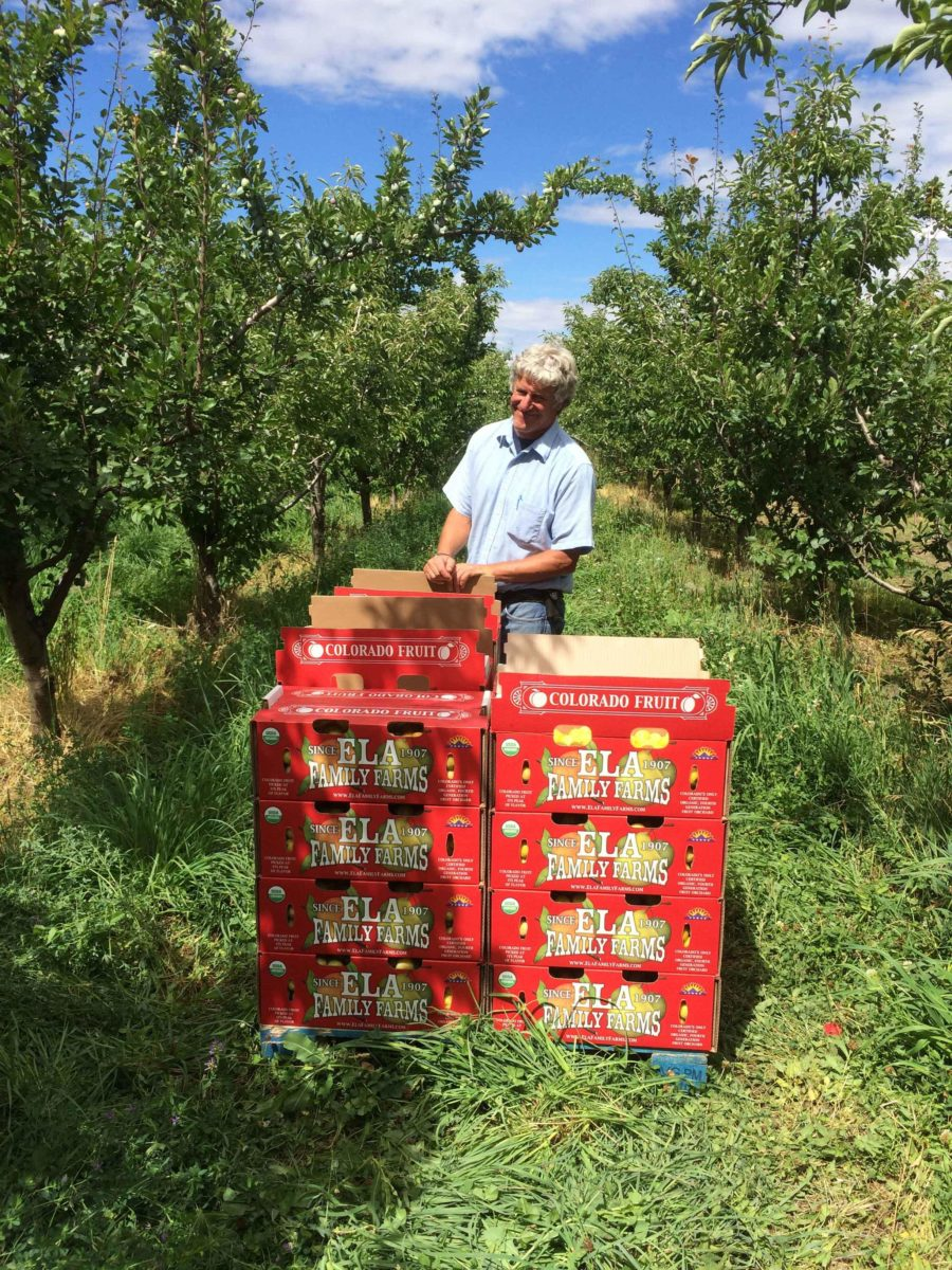 Man with fruit crates in his orchard
