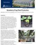 strawberry plug plant production fact sheet