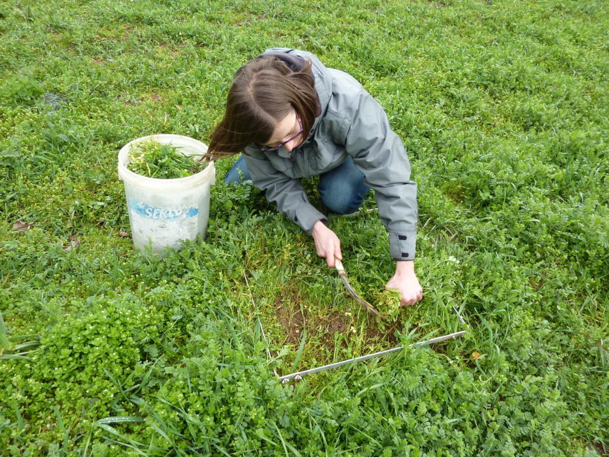 Woman cutting a plant sample